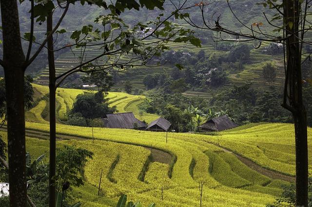Vietnamese rice fields - WOIMA Corporation